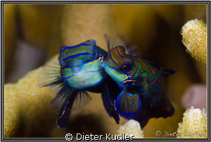 The Kiss by Dieter Kudler 